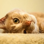 How to Save Money on Pet Care